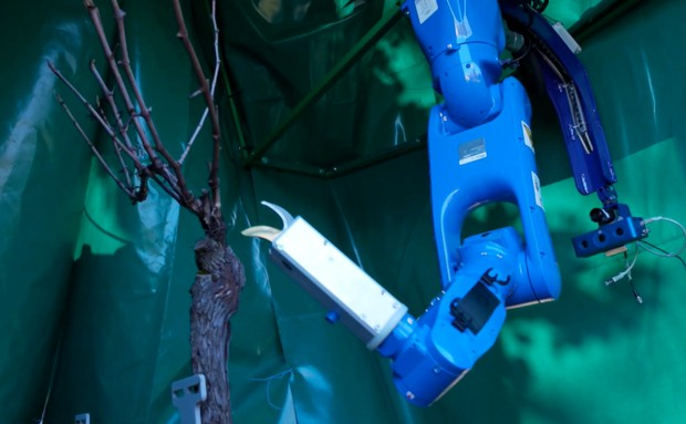 R2T2, robot de taille de la vigne