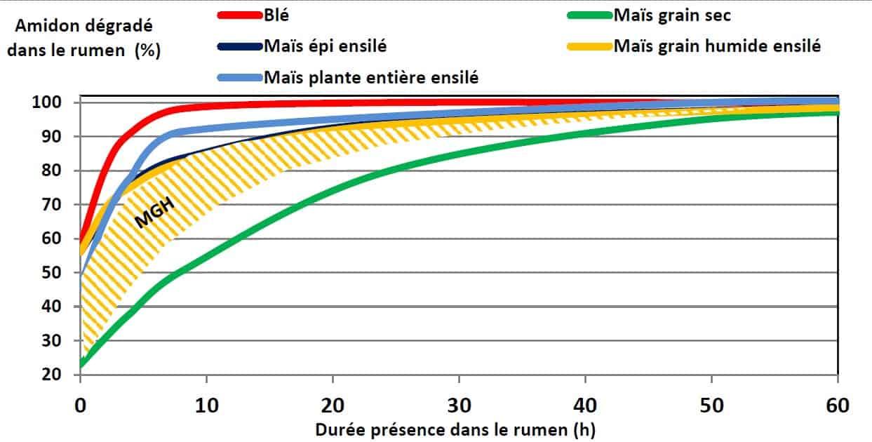 Dynamique de la dégradation dans le rumen des amidons.