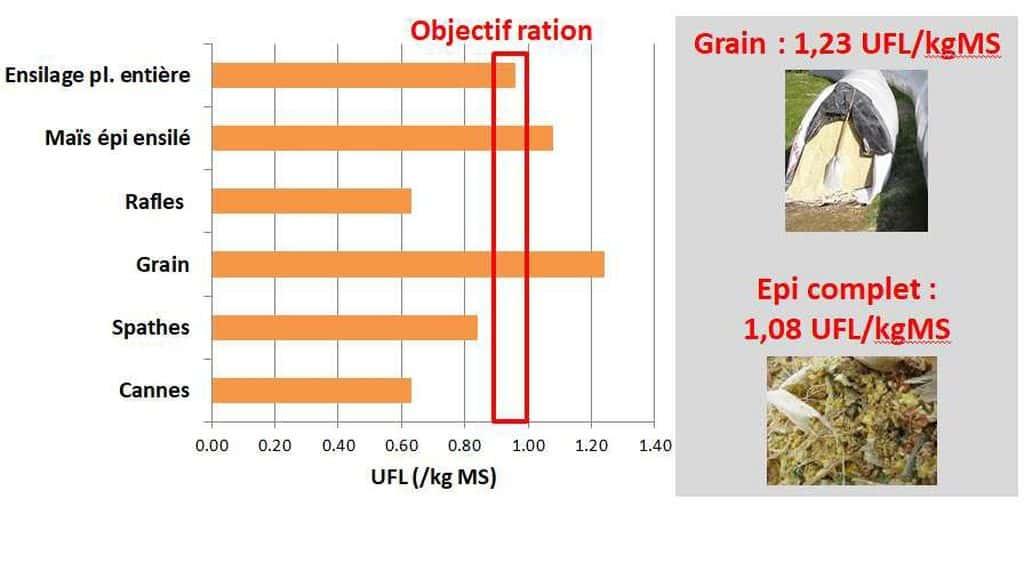 L'énegrie dans le maïs et ses composantes