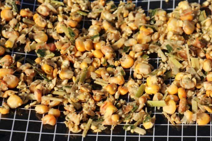 Grains de maïs après ensilage